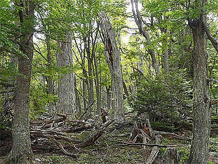 La forêt de la sorcière