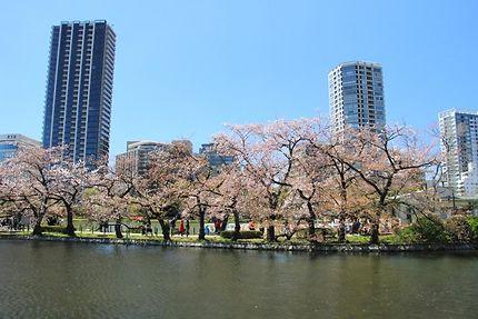 Le lac Shinobazu au Parc Ueno
