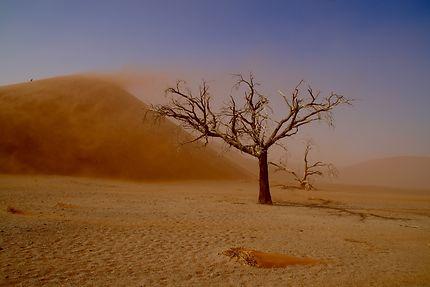 Tempête de sable à Sossusvlei