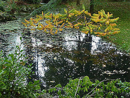 Etang du jardin anglais
