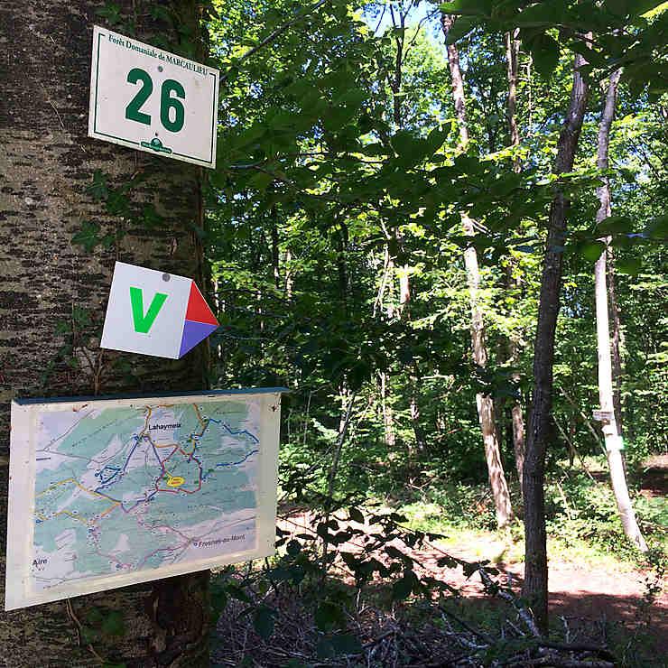 Lorraine : le Vent des Forêts, des balades entre nature et art contemporain
