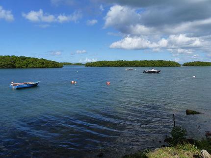 mangrove à Sainte-Rose, Guadeloupe