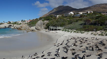 Pingouins près de Cape Town