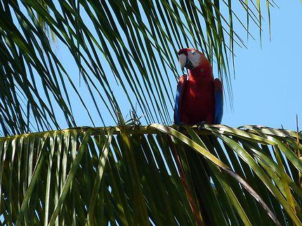 Arras posé dans un palmier