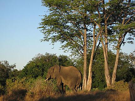 Nord-Zimbabwe