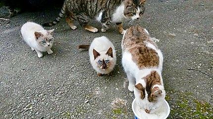 Petits chats au village