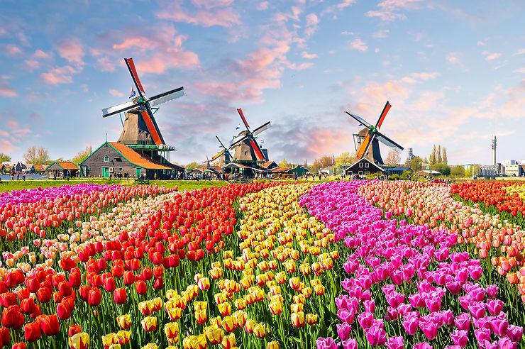 Insolite - Les Pays-Bas ne veulent plus être appelés Hollande !