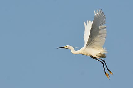 Oiseau au bord du lac
