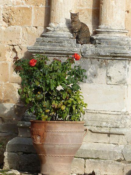 Le chat statue