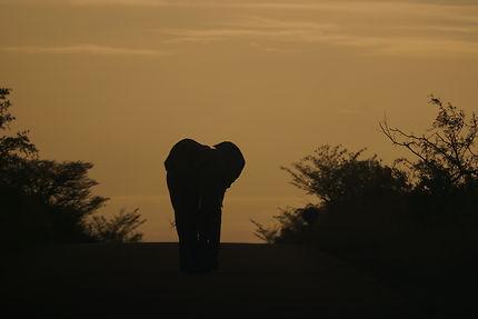 Eléphant en approche