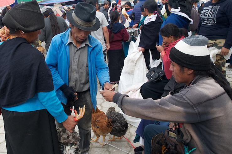 Au marché aux bestiaux d'Otavalo