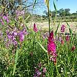 Fleurs de Namibie