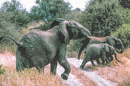 Éléphants au parc national de Tarangire