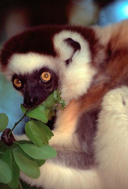 Les faunes à Madagascar