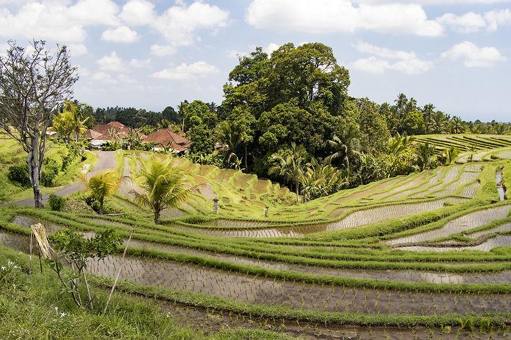 Bali : autour de Munduk, monts et rizières
