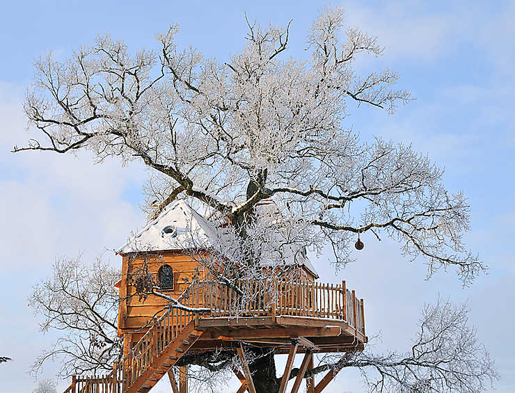 Dans un arbre près de Rodez (Aveyron)