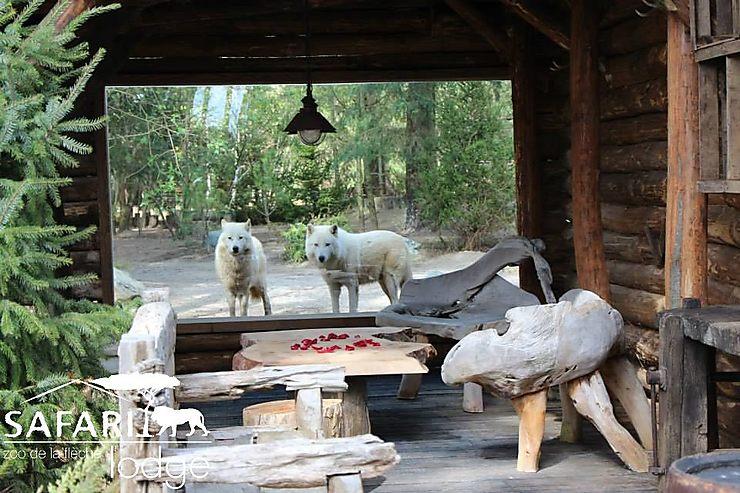 Dans un zoo à La Flèche (Sarthe)