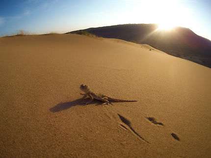 Lever de soleil sur les dunes chantantes
