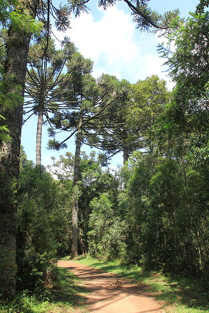 Jardim das Palmeiras à Campo Largo