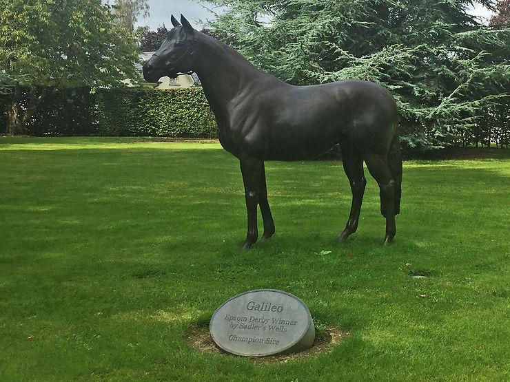 Tipperary, au pays des chevaux irlandais