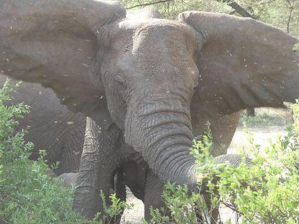 PUISSANCE DE L'ELEPHANT