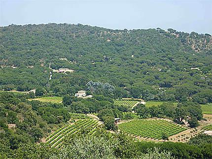 Vue provençale (et les villas)