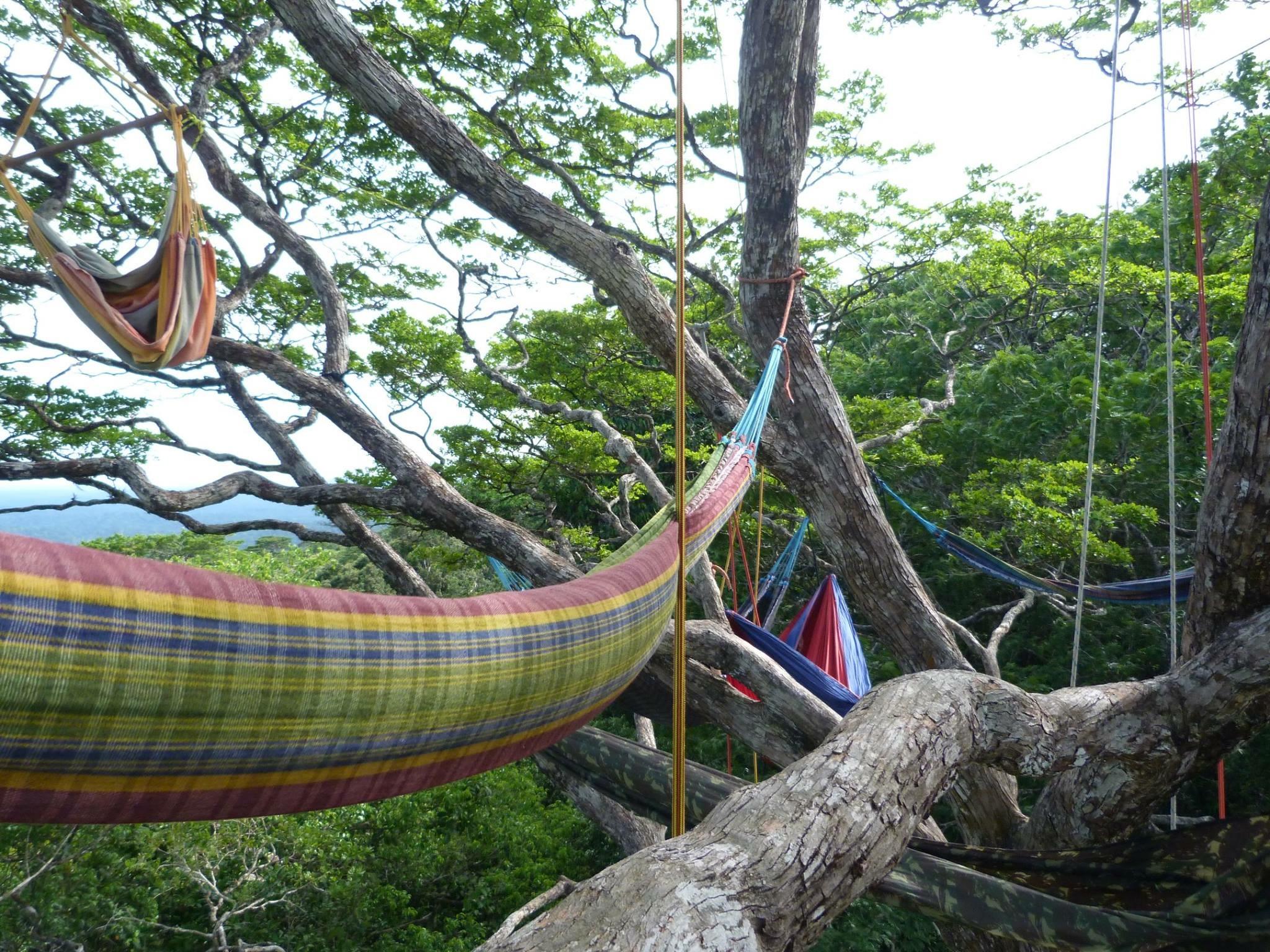 Comment Installer Un Hamac Sans Arbre hamac dans la canopée : arbres : kaw : côte atlantique