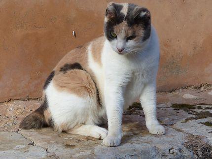 Chat très amical du Monastère