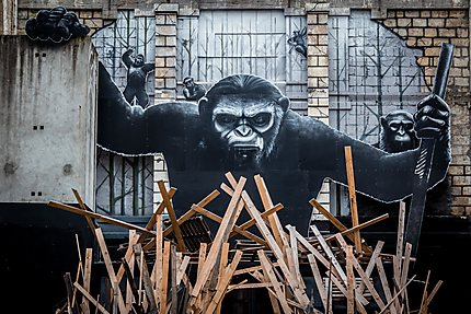 Projet Darwin - Le gorille