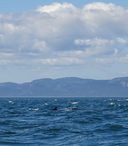 Un peu de baleine