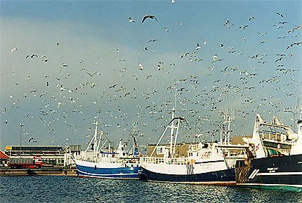 Mouettes au port