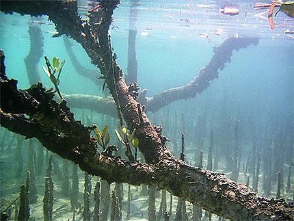 Mangrove de Nosy Lava