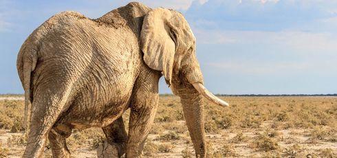 La Namibie, terre sauvage -
