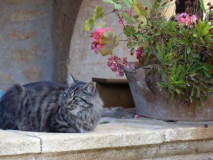 Encore un magnifique chat