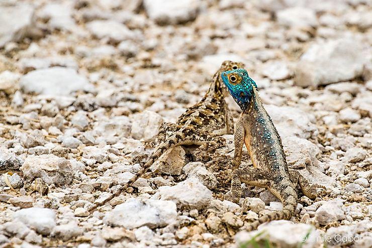 Les reptiles prennent la pose