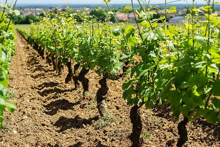 Les routes des vins de Bourgogne