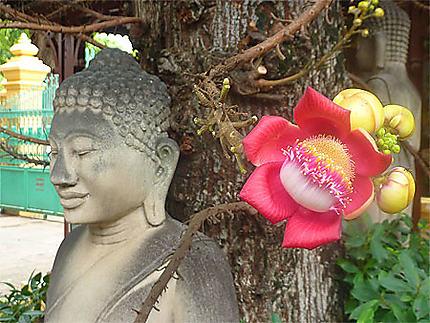 Bouddha fleuri
