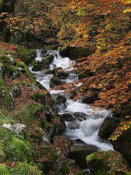 Ruisseau dans la Chartreuse