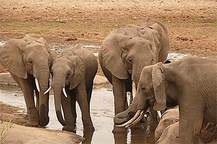 Eléphant dans le parc de Tarangire