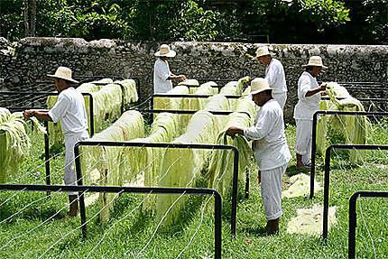 Hacienda Sotuta de Peón á Mérida, Yucatán