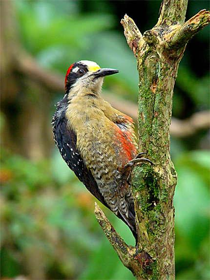 Bird in La Paz