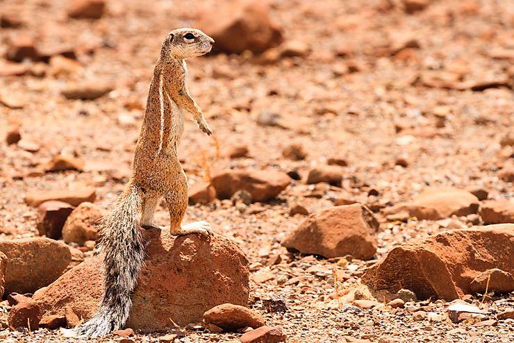 Ecureuil à l'affut