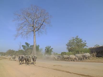 Route le long du Mékong