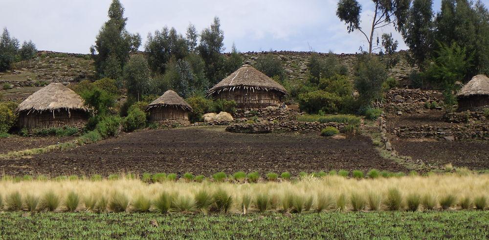 Abyssinie le toit de l'Afrique