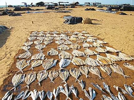 Poissons sur la plage de Negombo
