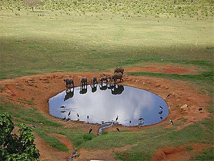 Safari et éléphants