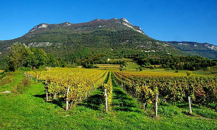 La route des vins de Savoie