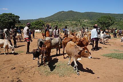 Marché aux bestiaux de Keyafer