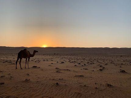 Coucher de soleil à Wahiba Sands
