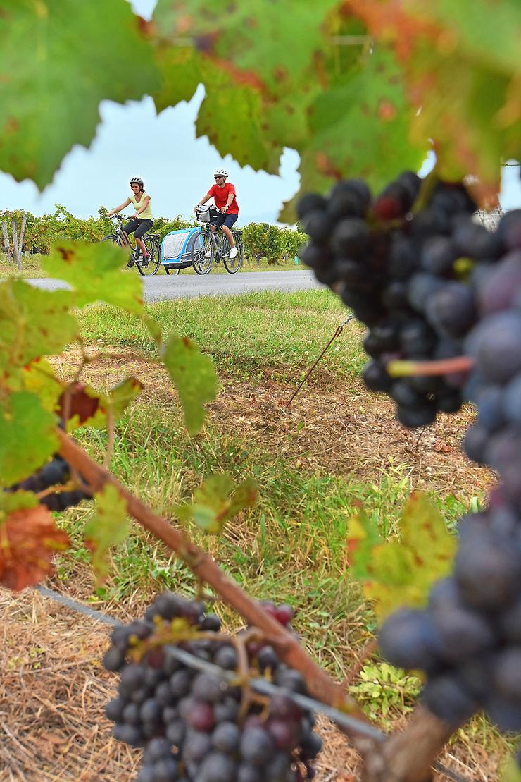 Famille à vélo dans les vignes à Saint-Hilaire-Saint-Mesmin (boucle 4502)